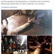Calamaro record da 150 chili per 10 metri di lunghezza2
