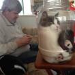 Gatti matti incastrati nei posti impensabili5