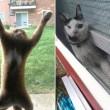 Gatti matti incastrati nei posti impensabili10
