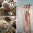 Gatti matti incastrati nei posti impensabili8