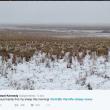 La sfida di Liezel Kennedy: trovate le pecore in questa FOTO 2
