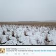 La sfida di Liezel Kennedy: trovate le pecore in questa FOTO 3