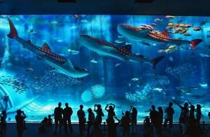 Genova:acquario