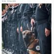 Saint Denis, nel blitz ucciso il cane poliziotto Diesel2