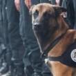 Saint Denis, nel blitz ucciso il cane poliziotto Diesel