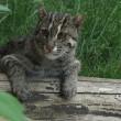 Gatti segreti: quasi nessuno li vede mai