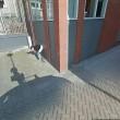 Pipì in strada e sigaretta. Google Street View la fotografa02