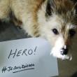 Parigi, #JeSuisDiesel su twitter per cane poliziotto morto 4