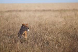Safari in Tanzania