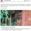 Australia lucertola da 1, 50 metri sul muro di casa