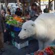 """Orso polare """"in giro"""" per Roma: provocazione di Greenpeace3"""