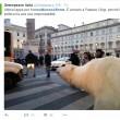 """Orso polare """"in giro"""" per Roma: provocazione di Greenpeace"""