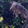 Cane adottato dal macaco. In cerca di cibo insieme2