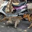 Cane adottato dal macaco. In cerca di cibo insieme5