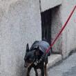 Elisabetta Canalis, suo cane non si trattiene10