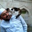 Istanbul, imam apre moschea ai gatti randagi4