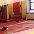 Istanbul, imam apre moschea ai gatti randagi3