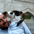 Istanbul, imam apre moschea ai gatti randagi2