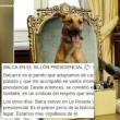 Argentina: Cane Macri su sedia presidenziale, FOTO virale
