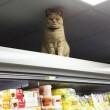 Olly, il gatto che da sei anni vive in un supermercato4