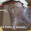 'Ndrangheta a Torino, testa di maiale a vittime: 20 arresti