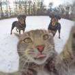 Manny, il gatto capace di farsi i selfie FOTO3