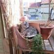 Gatto nella cucina dov'è nascosto? Nuovo tormentone web2