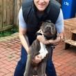 Bulldog devasta a morsi porta cucina