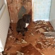 Bulldog devasta a morsi porta cucina3