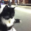 "Felix gatta anti-topi ""assunta"" dalla stazione9"