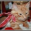 Jesper, gatto sciatore che si comporta da cane 8