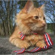Jesper, gatto sciatore che si comporta da cane 7