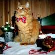 Jesper, gatto sciatore che si comporta da cane 6