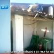 Macaco ubriaco terrorizza clienti bar col machete