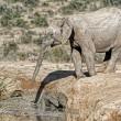 YOUTUBE Mamma elefante salva cucciolo caduto nel fango2
