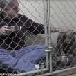 Pitbull non mangia veterinario entra in gabbia3