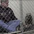 Pitbull non mangia veterinario entra in gabbia8