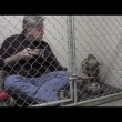 Pitbull non mangia veterinario entra in gabbia5
