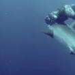 VIDEO YOUTUBE Squalo con amo in bocca: il sub lo salva 6