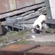 Video YouTube - Orso polare attacca donna 3