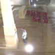 VIDEO YOUTUBE Filmato mentre fa pipì sul monumento ai caduti 2