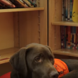 Video YouTube - Fernie, il cane che sa leggere 7
