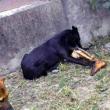 Al cimitero trovano cane che mangia gamba di un morto FOTO