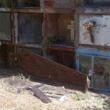 Al cimitero trovano cane che mangia gamba di un morto FOTO 2