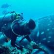 Squalo balena intrappolato in corda da pesca 3
