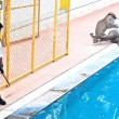 YOUTUBE Leopardo entra in una scuola, panico e 6 feriti 04