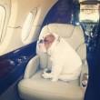 Alitalia condannata: vietò imbarco di un cane a Milano