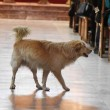 Cane in chiesa durante messa fa sorridere bimbi malati3