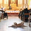 Cane in chiesa durante messa fa sorridere bimbi malati2