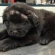 Brody, cane sopravvissuto a 18 pallottole trova una famiglia